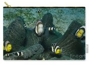Whole Family Of Clownfish In Dark Grey Carry-all Pouch