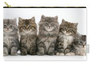 Maine Coon Kittens Carry-all Pouch