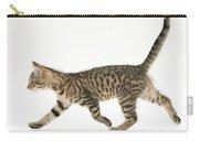 Tabby Kitten Carry-all Pouch