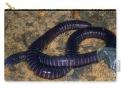Boettgers Caecilian Carry-all Pouch