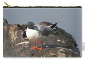 Bonaparts Gull Carry-all Pouch