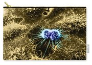 Hela Cells With Adenovirus Carry-all Pouch