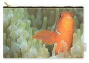 Spinecheek Anemonefish In Anemone Carry-all Pouch