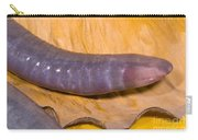 Congo Caecilian Carry-all Pouch