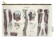 Anatomie Methodique Illustrations Carry-all Pouch