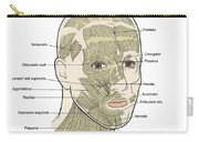 Illustration Of Facial Muscles Carry-all Pouch