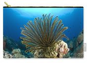 A Feather Star With Arms Extended Carry-all Pouch