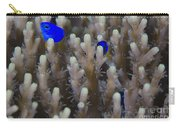 A Pair Of Yellowtail Damselfish Amongst Carry-all Pouch
