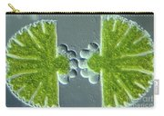 Algae Binary Fission Carry-all Pouch by M. I. Walker