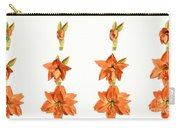 Amaryllis Blooming Carry-all Pouch