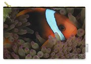 Anemonefish In Purple Tip Anemone Carry-all Pouch