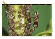 Ant Formicidae Pair Protecting Aphids Carry-all Pouch