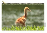 Baby Sandhill In The Sunshine Carry-all Pouch by Carol Groenen