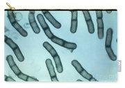 Bacillus Megaterium Carry-all Pouch