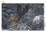 Barbary Macaque Male With Infant Carry-all Pouch