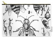 Bee Anatomy Historical Illustration Carry-all Pouch