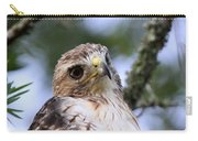 Bird - Red-tailed Hawk - Bashful Carry-all Pouch