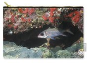 Blackfin Squirrelfish Swimming Carry-all Pouch