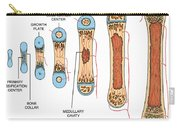 Bone Growth Carry-all Pouch by Science Source