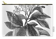 Botany: Cinnamon Tree Carry-all Pouch