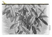 Botany: Ficus Elastica Carry-all Pouch