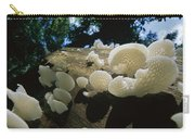 Bracket Fungus Favolus Brasiliensis Carry-all Pouch