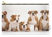 Bulldog Pups In A Row Carry-all Pouch