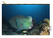 Bumphead Parrotfish, Australia Carry-all Pouch