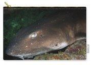 Cat Shark Sleeping, Pulau Tioman Carry-all Pouch