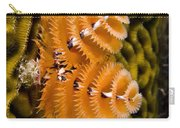 Christmas Tree Worm Spirobranchus Carry-all Pouch