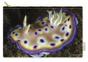 Chromodoris Kuniei Nudibranch, North Carry-all Pouch