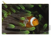 Clownfish In Green Anemone, Indonesia Carry-all Pouch