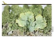Common Greenshield Lichen Carry-all Pouch by Ted Kinsman