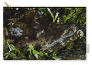 Crocodile Fish, Indonesia Carry-all Pouch