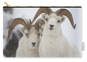 Dall Sheep Ovis Dalli Rams, Yukon Carry-all Pouch