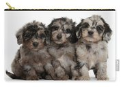 Daxiedoodle Poodle X Dachshund Puppies Carry-all Pouch by Mark Taylor