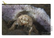 Decorator Crab With Mauve Sponge Carry-all Pouch