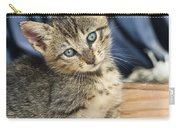 Domestic Cat Felis Catus Kitten, Germany Carry-all Pouch