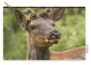 Elk Cervus Canadensis With Dandelion In Carry-all Pouch