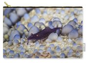 Emporer Shrimp On A Large Pin Cushion Carry-all Pouch