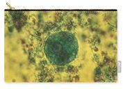 Entamoeba Coli Trophoite Lm Carry-all Pouch by Eric V. Grave