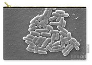 Escherichia Coli, Sem Carry-all Pouch by CDC/Science Source