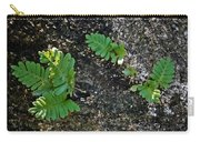 Fern And Coquina Carry-all Pouch
