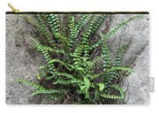 Fern Growing From Crack In Limestone Carry-all Pouch