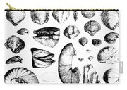 Fossilized Shells, 1844 Carry-all Pouch