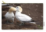 Gannets Showing Mutual Preening Behavior Carry-all Pouch