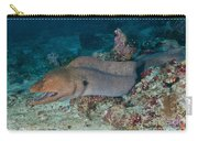 Giant Moray Eel Swimming Carry-all Pouch by Mathieu Meur
