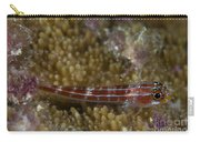 Goby On Coral, Australia Carry-all Pouch