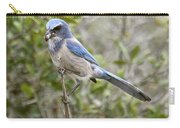 Greedy Florida Scrubjay Carry-all Pouch