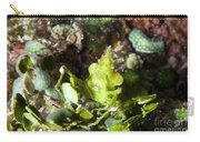 Green Arrowhead Crab, Papua New Guinea Carry-all Pouch